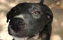 Baile de dança salão arrecada doações para abrigo animal